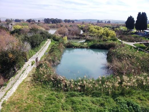 מהמבצר הצלבני משקיפים על הבריכות ועופות המים