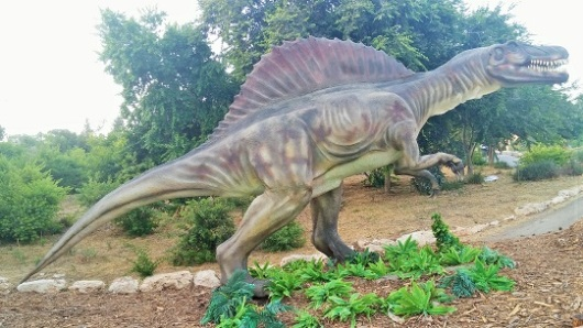 """ספינוזאור (""""לטאה קוצנית"""") – הטורף הגדול ביותר בכל הזמנים. נולד לפני 95 מיליון שנה, במצרים. אורך ממוצע: 16-18 מ', כאורכו של הכותל המערבי. משקל ממוצי: 8 טון, כמו 12 היפופוטמים. אהב לאכול: דגים, נבלות, בעצם הוא היה טורף אוכל כל"""