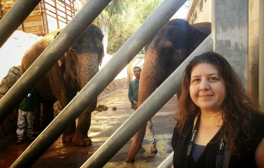 חיוך של שמחה אחרי האכלת הפילות בבננות. מדי שיש יש הגרלה לצילום עם הפילים. ההכנסות קודש למקלט פילים בתאילנד