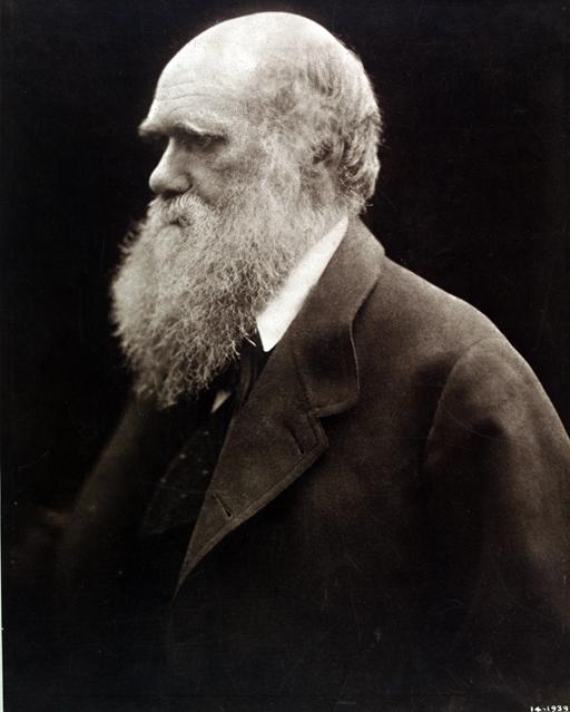 Charles Darwin, Julia Margaret Cameron, 1868, printed 1875   Artist:   Date:   Credit line: (c) Victoria and Albert Museum, London