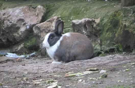 סוג של אתנחתא קומית. שפן (ארנב?) בעמק התימנים