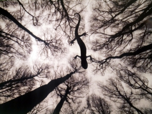 טבע דומם - אדוין חיסברס (הולנד. טריטון הרכס צולם בתחילת האביב בחלדרלנד. חיסברס ישב בתוך הנחל, לבוש חליפת צלילה, והניע בעדינות את המצלמה השקועה במים עד שהייתה בדיוק מתחת לטריטון)
