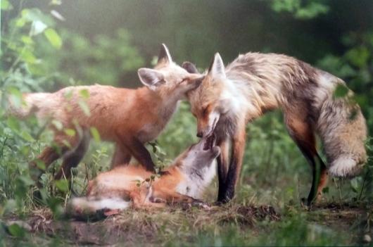 """אימא חזרה – אשלי סקלי (ארה""""ב. צולם בפארק הלאומי גרנד טיטון, ויומינג. קטגוריית צלמים צעירים, גילאי 11-14)"""
