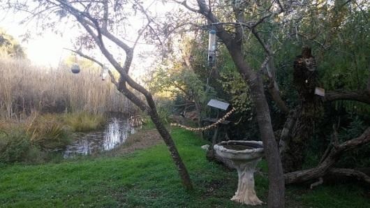 התחנה לחקר ציפורים, ליד הכנסת