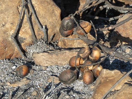 מה שנותר מעץ שרוף