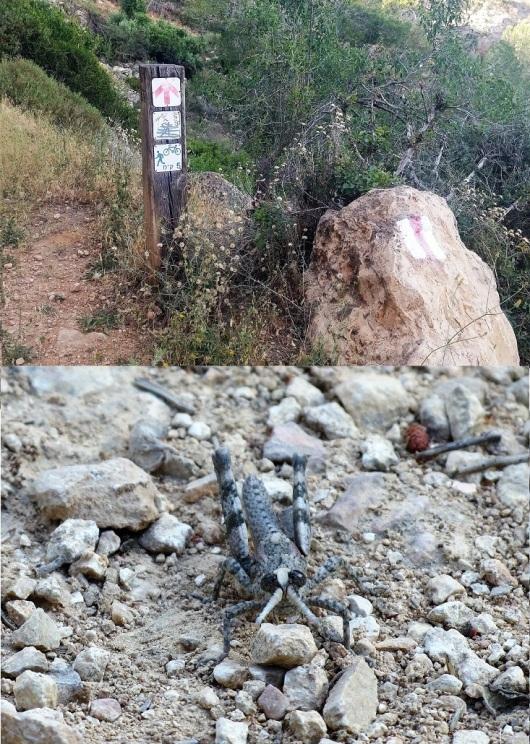 לאורך השביל יש שלטים המסמנים כמה קילומטרים כבר צעדתם, וגם לא מעט חרקים משונים
