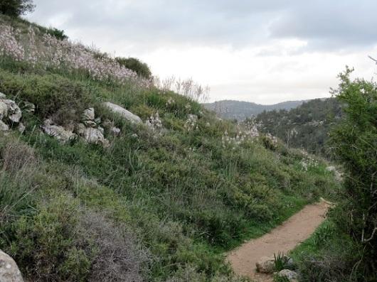 בין הירוק לפריחה הלבנה. החלק האחרון במסלול המעגלי של קטלב (סימון שבילים שחור)